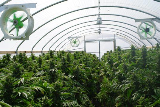 EU-legal-cannabis-market