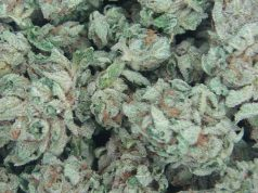bubba-kush-strain-review
