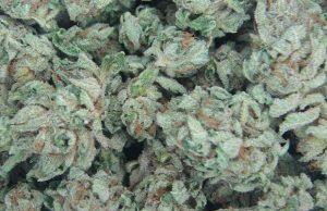 bubba-kush-strain-review
