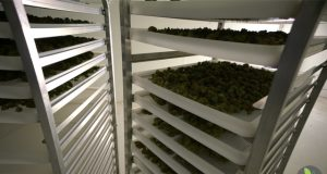 new-technology-takes-marijuana-decontamination-to-the-next-level