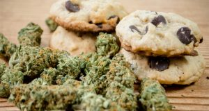 study-aims-to-find-out-why-cannabis-causes-the-munchies