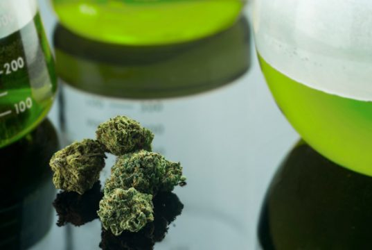 big-pharmaceutical-company-going-all-in-on-cannabis