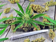 university-of-connecticut-new-class-on-cannabis-already-full-for-spring-semester