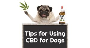 Important-Tips-for-Using-CBD-for-Dogs-king-kanine