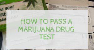 how-to-pass-a-marijuana-drug-test-420-times