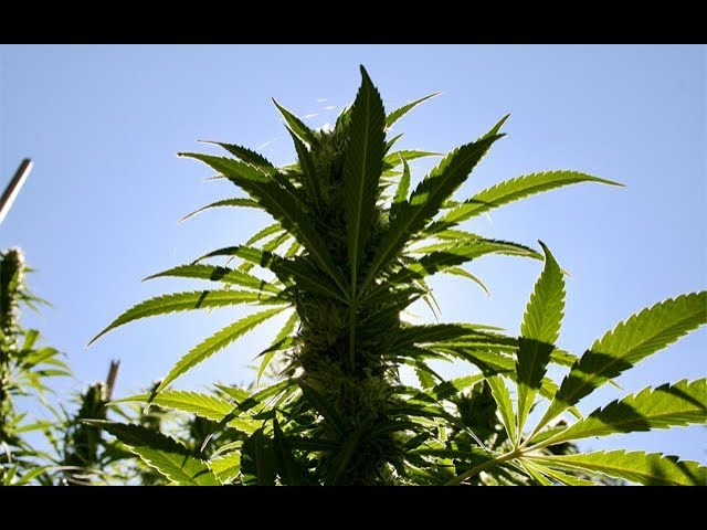 01-10-2019 – Cannabis News with Joe Klare