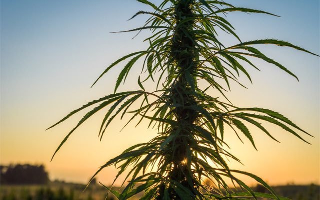 how-marijuana-exposes-the-fallacy-of-government-expertise