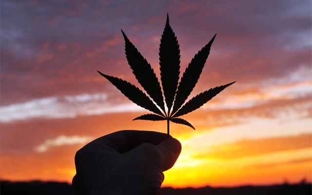 大麻是安全的,但是,這就是 - 不為什麼,它-應該待的法律
