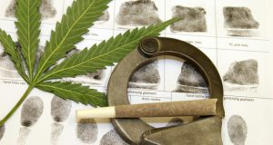san-francisco-expunges-over-9000-prior-cannabis-convictions