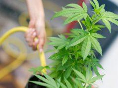 the-job-creating-power-of-the-legal-marijuana-industry