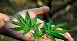 can-federal-marijuana-law-reform-live-up-to-the-hype