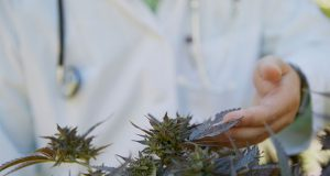 members-of-congress-urge-DEA-to-speed-up-approval-process-for-medical-marijuana-research-applications