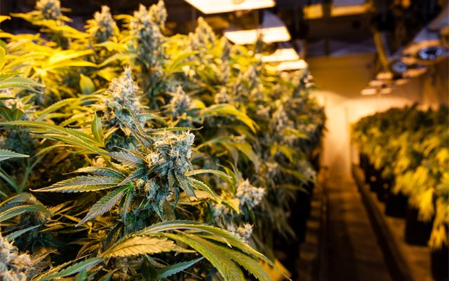 federal-bill-would-provide-new-protections-for-legal-cannabis