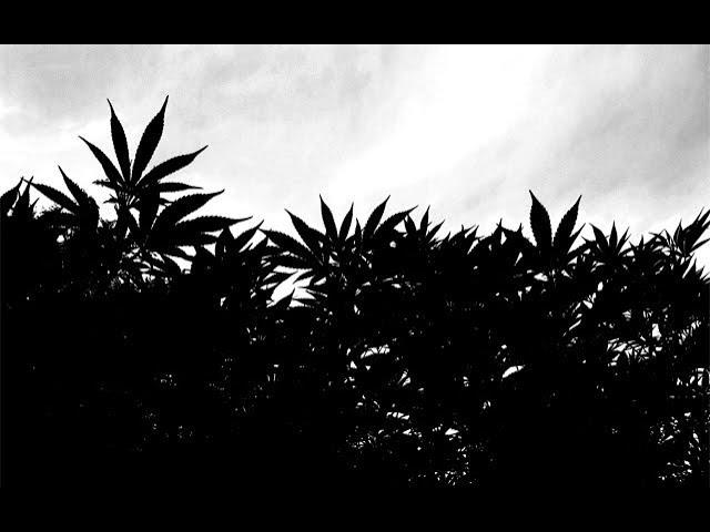 06-11-2019 – Cannabis News with Joe Klare