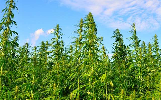Ohio, One of Last States Without a Hemp Pilot Program
