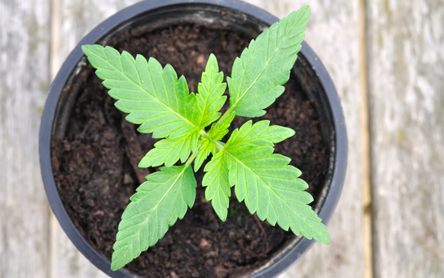 The University of the Sciences in Philadelphia to Offer First MBA in Cannabis Education