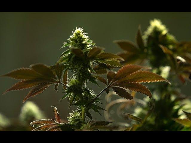 09-11-2019 – Cannabis News with Joe Klare