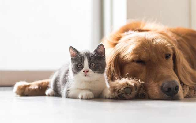 is-CBD-safe-for-pets-ultimate-guide-natures-arc-organics