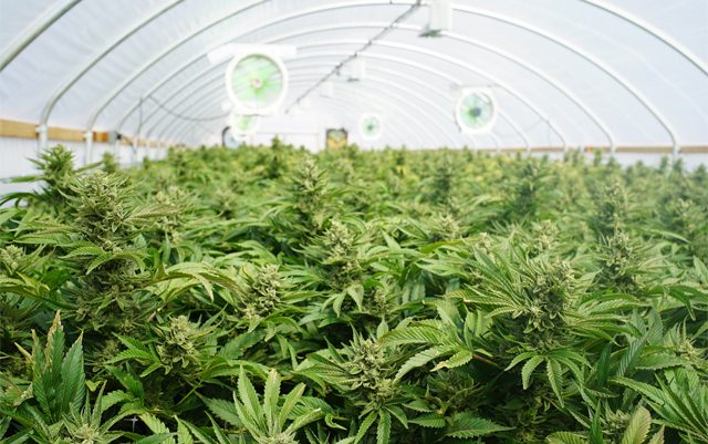 cannabis-companies-in-maine-prepare-for-the-long-licensing-process