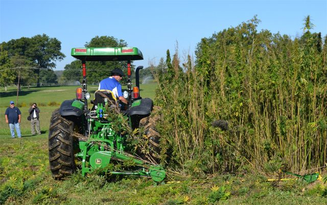 optimism-shows-despite-setbacks-for-NY-state-hemp-businesses