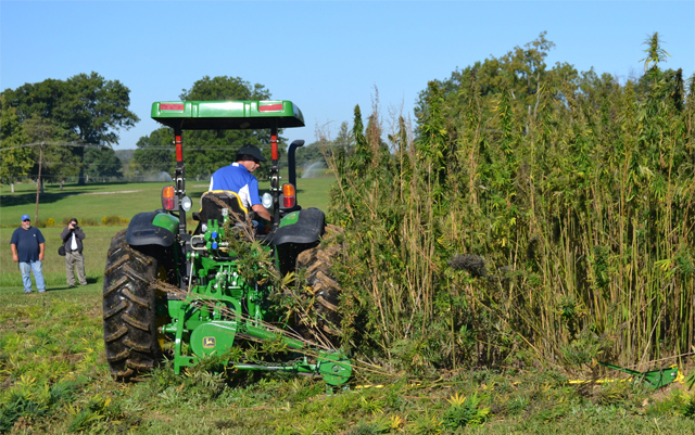 Optimism Shows Despite Setbacks for New York State Hemp Businesses