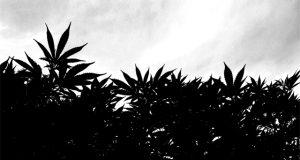 manufacturers-in-connecticut-speak-out-against-legalization