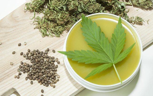 highest-CBD-strain-of-cannabis