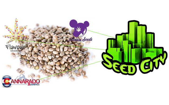 best-cannabis-seed-bank-2020